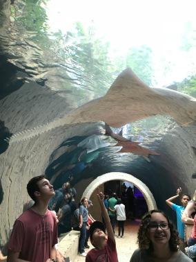 Shark attack!!
