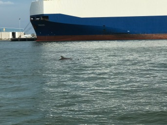 (Little fin - Dolphin) Dolphin Bay Tour