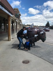 """Duncan and Xavier with the """"sheep"""" Buffalo"""
