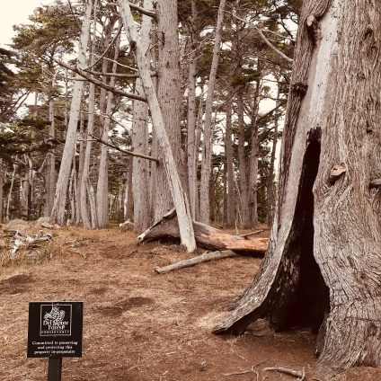 The Crocker Grover (contains some of the largest and oldest Monterey Cypress in existence)