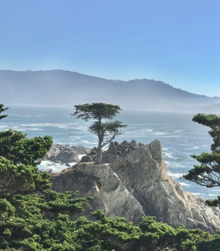 """Lone Cypress"" 200 yr old Cypress - Mid way point - 17 Mile Drive"