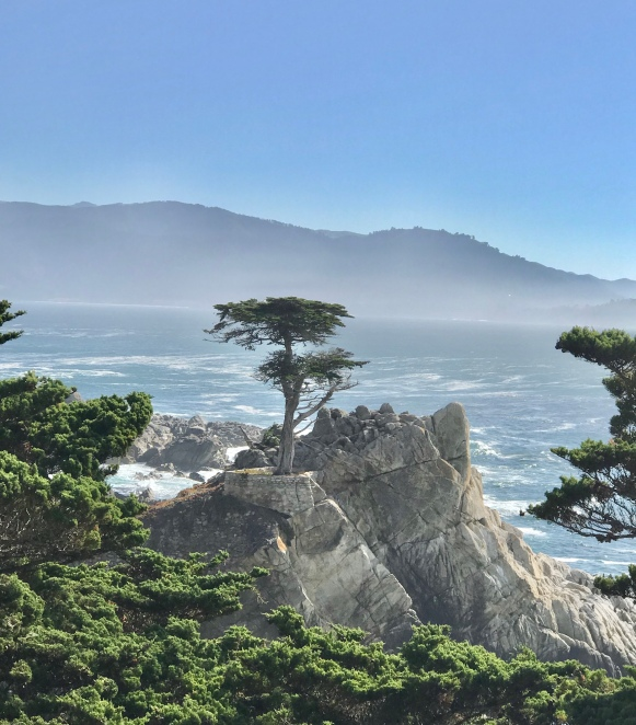 """""""Lone Cypress"""" 200 yr old Cypress - Mid way point - 17 Mile Drive"""